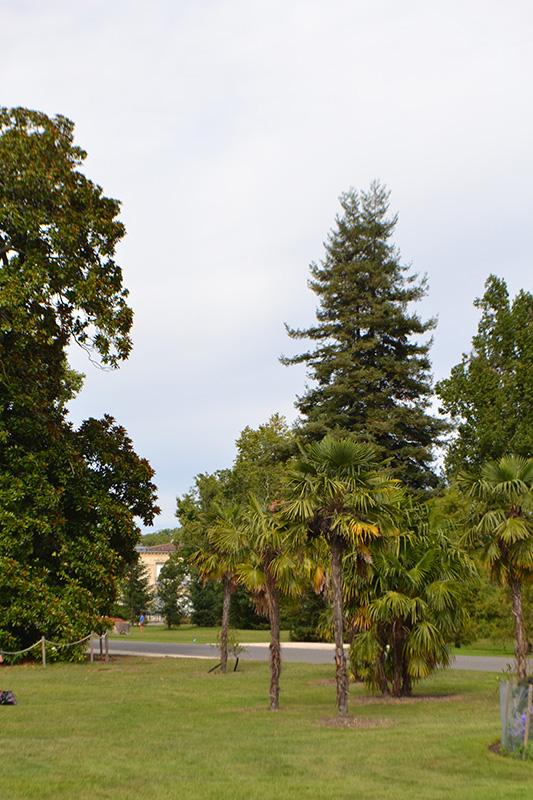 Les palmiers du Parc Bordelais